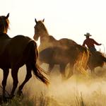 טפטים סוסים דוהרים