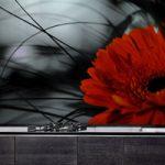 תמונות זכוכית דגם חרצית אדומה